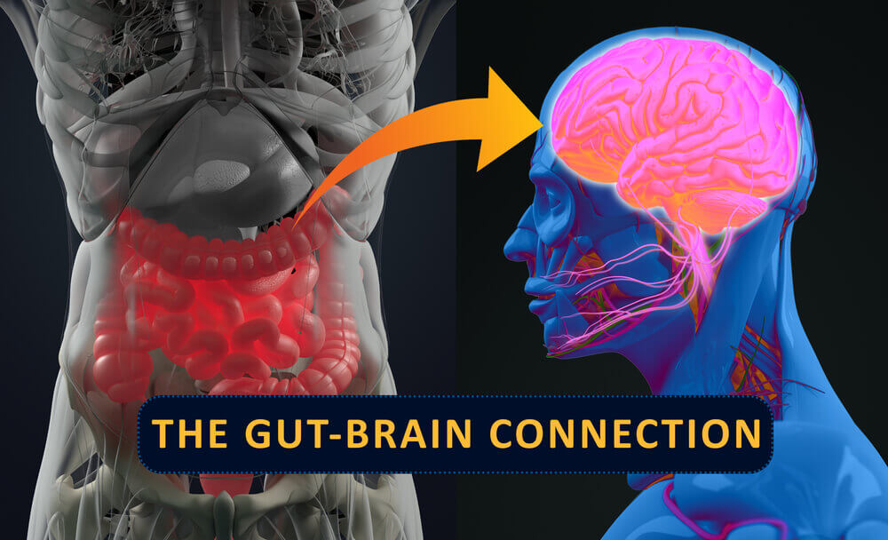 Image for Are the Brain and the Gut Connected?